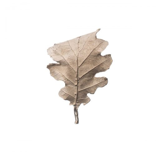 Autumn oak / Quercus
