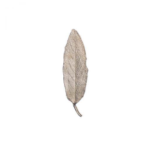 Sage / Salvia